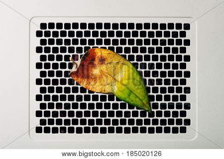 A half-withered leaf on a rectangular lattice. White textural background. Conceptual photography. Pattern. Technology & Life is nature. Mock-up poster