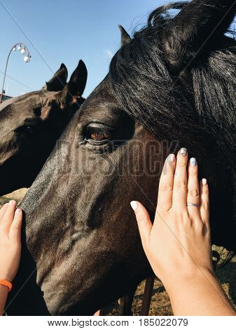 Female and child's hand strokes a beautiful horse