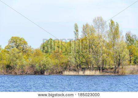 View Of Trees Close To  The Dnieper River