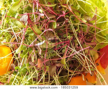 Amaranth, Beet, And Broccoli Microgreens In A Vegetable Salad