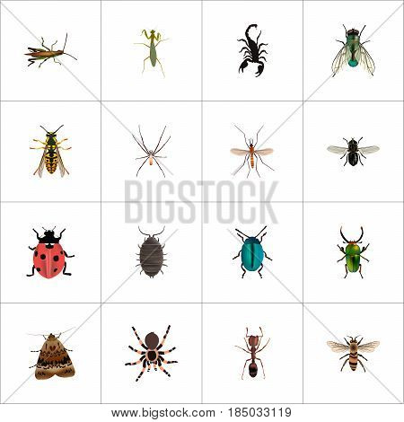 Realistic Housefly, Spider, Gnat And Other Vector Elements. Set Of Bug Realistic Symbols Also Includes Bee, Insect, Midge Objects.