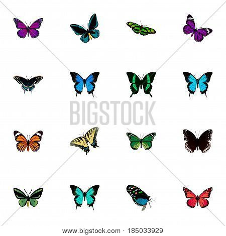 Realistic Copper, Tropical Moth, Monarch And Other Vector Elements. Set Of Butterfly Realistic Symbols Also Includes Moth, Sky, Cypris Objects.