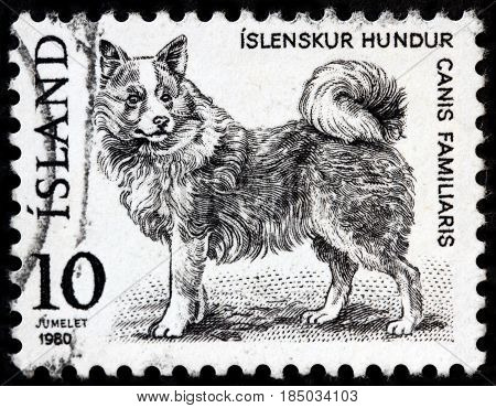 LUGA RUSSIA - APRIL 26 2017: A stamp printed by ICELAND shows Domestic Dog circa 1980