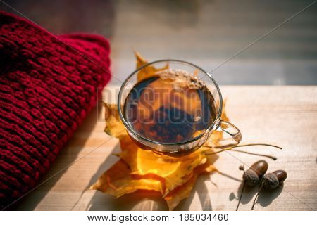 Autumn Still Life: Tea on maple leaves on a wooden table near the window. The sun's rays on a cup of brewed tea. Cup of hot tea on a sunny day on a window background. Autumn tea