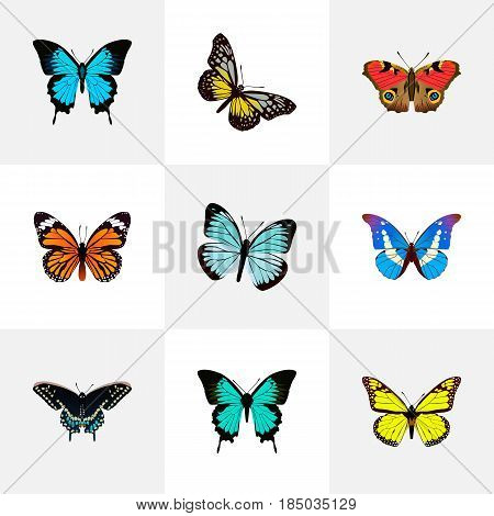 Realistic American Painted Lady, Monarch, Copper And Other Vector Elements. Set Of Butterfly Realistic Symbols Also Includes Bluewing, Hairstreak, Blue Objects.