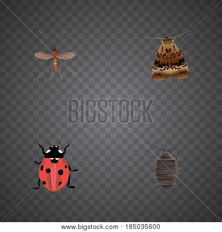 Realistic Butterfly, Dor, Ladybird And Other Vector Elements. Set Of Bug Realistic Symbols Also Includes Insect, Beetle, Ladybird Objects.