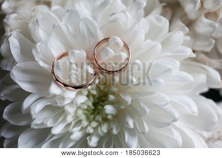 Wedding Rings Close-up On White Chrysanthemum.chrysanthemums And The Wedding Ring.thin Wedding Rings