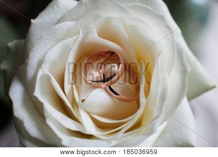 Golden Wedding Rings On Bridal Bouquet.wedding Rings On The Rose. Set Of Wedding Rings In Rose Taken