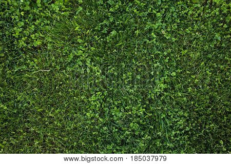 Green Grass Seamless Texture. Green Grass Background Texture. Field Of Fresh Green Grass Texture As
