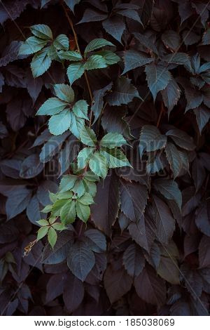 Green Leaf Texture. Leaf Texture Background. The Natural Texture Of The Grass. Autumn Foliage. Wild