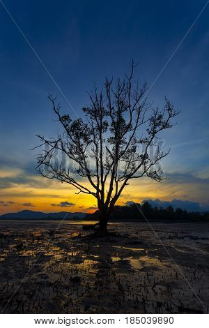 lonely tree in the sea in the sunset