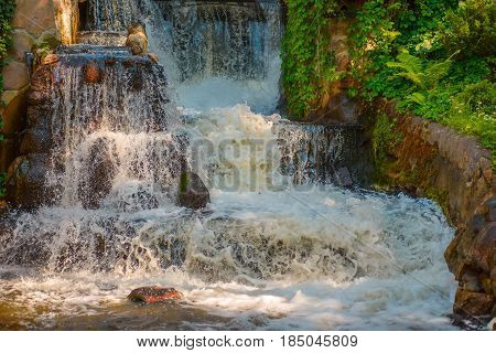 small waterfall and green grass in park
