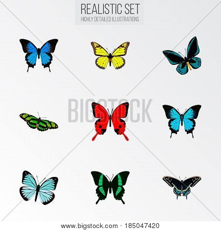 Realistic Common Blue, Archippus, Papilio Ulysses And Other Vector Elements. Set Of Beautiful Realistic Symbols Also Includes Green, Red, Monarch Objects.