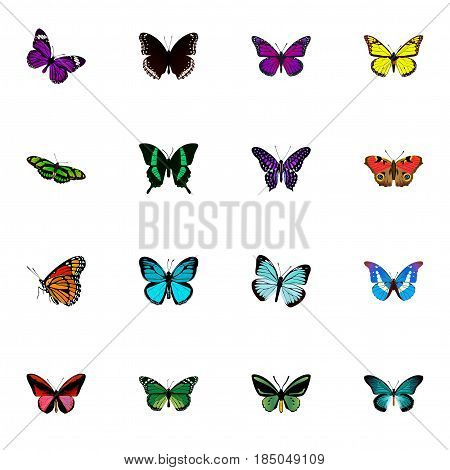 Realistic American Painted Lady, Purple Monarch, Birdwing And Other Vector Elements. Set Of Butterfly Realistic Symbols Also Includes Butterfly, Blue, Red Objects.