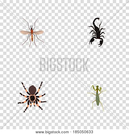 Realistic Poisonous, Gnat, Tarantula And Other Vector Elements. Set Of Bug Realistic Symbols Also Includes Mantis, Scorpion, Tarantula Objects.