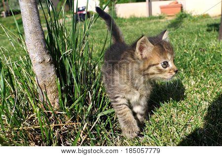 Little cat on the grass of garden.