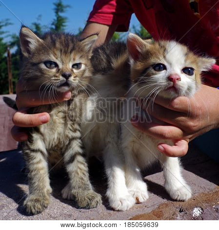 Little cats in children's hug in a garden.