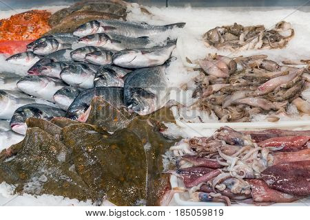 Fish and squid for sale at a market