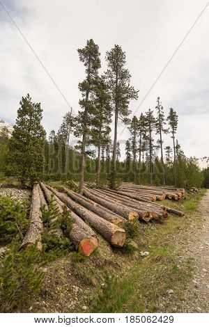 Deforestation In The Alps. Tree Trunk Stack From Lumber Industry In Alpine Woodland.
