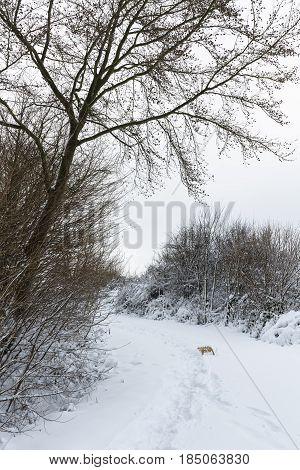 Eifel Winter Forest Road, Germany