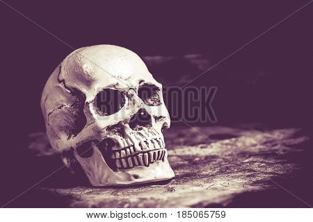 Skull of halloween party decoration, trick or treat