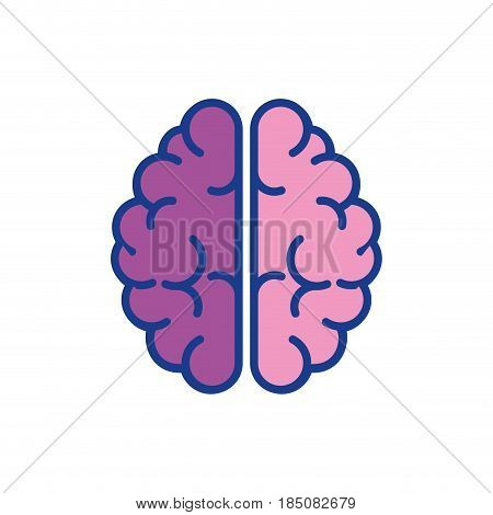 brain organ icon over white background . colorful desing. vector illustration