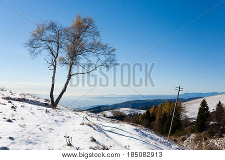 Solitaire Tree With Sun. Winter Season.