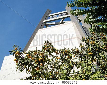 Fortunella margarita tree near Jewish Heritage Center of Bar-Ilan University in Ramat Gan Israel