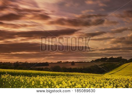 Rape field with dramatic sky-Hindon- Wiltshire UK