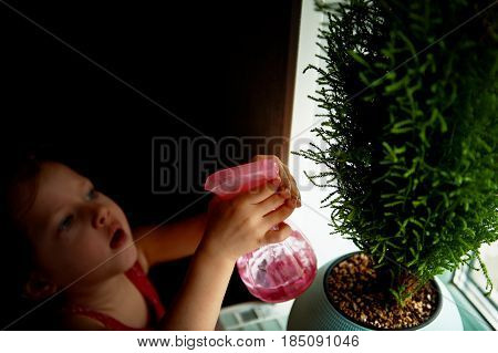 Child moistens the flowers from the spray. Green cypress tree in blue pot