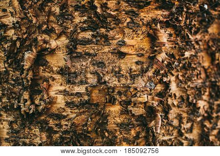 Organic abstract texture. Bark tree texture and background. Close up view of rough tree bark. Abstract texture and background for designers. Natural pattern.