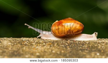 Snail Walking On White