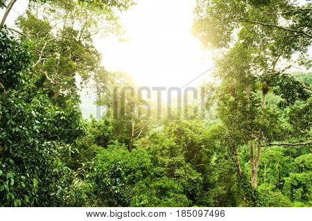Tropical rainforest with sunlight, National Park, Malaysia.