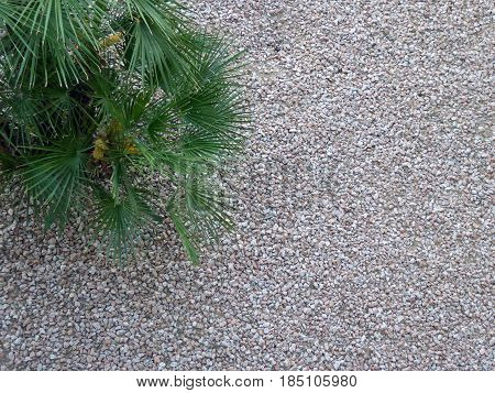 Top view of a rock and plant garden