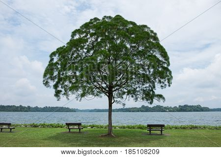 Lone Tree In Green Meadow Have Bench Both Sides Front Of Them Have Blue Sky And Large Scale Lake Bac