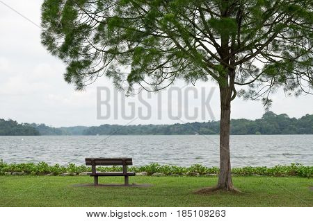 Lone Tree In Green Meadow Bench Besides Front Of Them Have Blue Sky And Large Lake Background, This