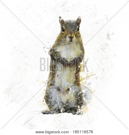 Digital Painting Of American Gray Squirrel