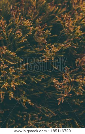 Vintage nature background. Green leaves texture and background. Green leaves in vintage background. Abstract texture and background for designers. Macro view of green vintage leaves.