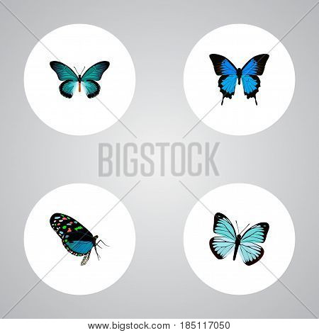 Realistic Pipevine, Lexias, Common Blue And Other Vector Elements. Set Of Beautiful Realistic Symbols Also Includes Bluewing, Butterfly, Blue Objects.