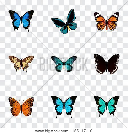 Realistic Tiger Swallowtail, Spicebush, Monarch And Other Vector Elements. Set Of Beauty Realistic Symbols Also Includes Black, Swallowtail, Monarch Objects.