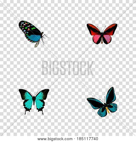 Realistic Callicore Cynosura, Demophoon, Copper And Other Vector Elements. Set Of Butterfly Realistic Symbols Also Includes Cynosura, Hairstreak, Red Objects.