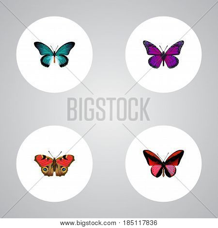 Realistic Pipevine, Callicore Cynosura, American Painted Lady And Other Vector Elements. Set Of Beautiful Realistic Symbols Also Includes Bluewing, Purple, Blue Objects.