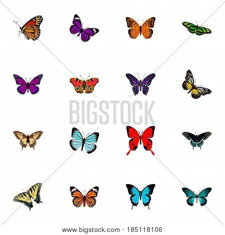 Realistic Danaus Plexippus, American Painted Lady, Checkerspot And Other Vector Elements. Set Of Beautiful Realistic Symbols Also Includes Orange, Beauty, Fly Objects.