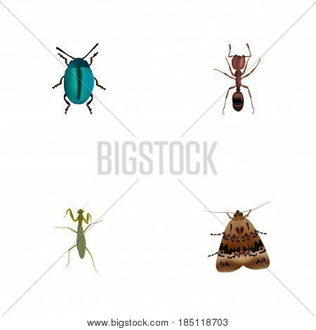 Realistic Bug, Emmet, Grasshopper And Other Vector Elements. Set Of Animal Realistic Symbols Also Includes Bug, Blue, Locust Objects.