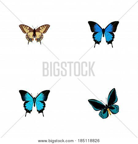 Realistic Papilio Ulysses, Demophoon, Tiger Swallowtail And Other Vector Elements. Set Of Beautiful Realistic Symbols Also Includes Swallowtail, Cypris, Bluewing Objects.