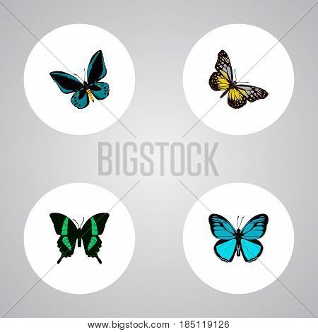 Realistic Beauty Fly, Sky Animal, Demophoon And Other Vector Elements. Set Of Beauty Realistic Symbols Also Includes Tropical, Sky, Yellow Objects.