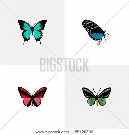 Realistic Tropical Moth, Copper, Hairstreak And Other Vector Elements. Set Of Beauty Realistic Symbols Also Includes Green, Red, Bluewing Objects.