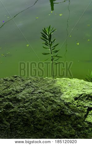 Green grass among the rocks on the bank of a lake  ,Tehran Iran