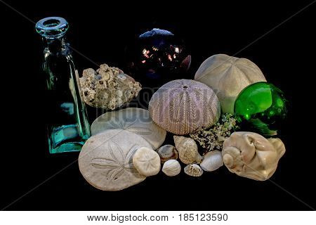 Still Life of Seashells Barnacles Bottle and Glass Floats