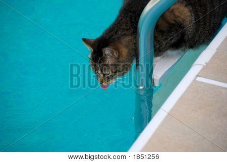 Precarious Perch